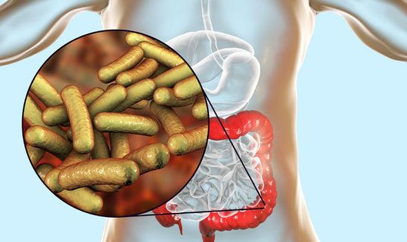 Shigella-Symptome: Bakterielle Infektion im Magen