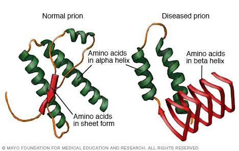Wie sich Prionen falten