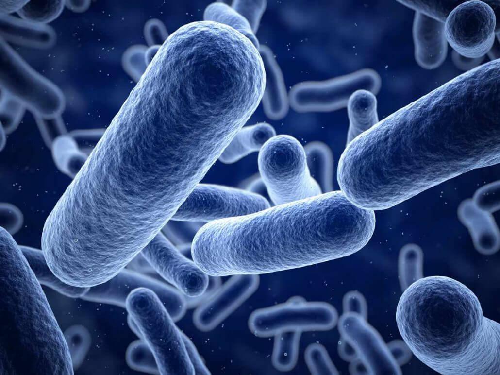 Listeria-Bakterien